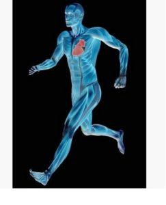 Hình ảnh mô phỏng cơ thể